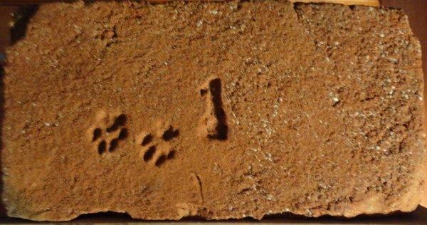 1 s tlapičkama - Místo nálezu Modřice u Brna. Rozměr 28x14,5x6,5.